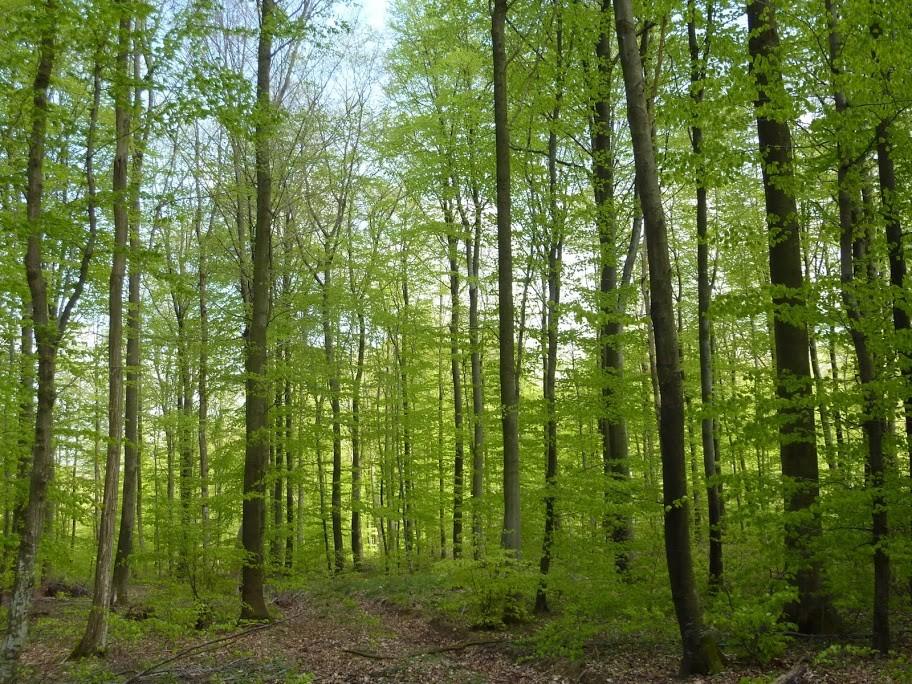 Parcs et for ts environnement d couvrir mairie de - Residence les jardins de la haye nancy ...