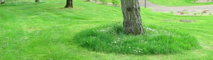 Espaces verts et fleurissement environnement d couvrir for Global espaces verts